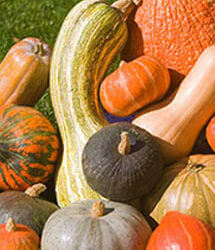 Fall Vegetables — A Delicious Bounty!